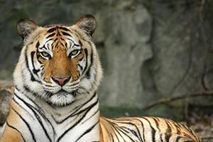 San Diego Zoo Safari Park